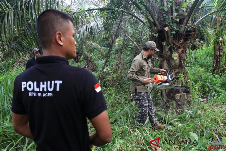Germany supports  Indonesia'`s sustainable palm oil development