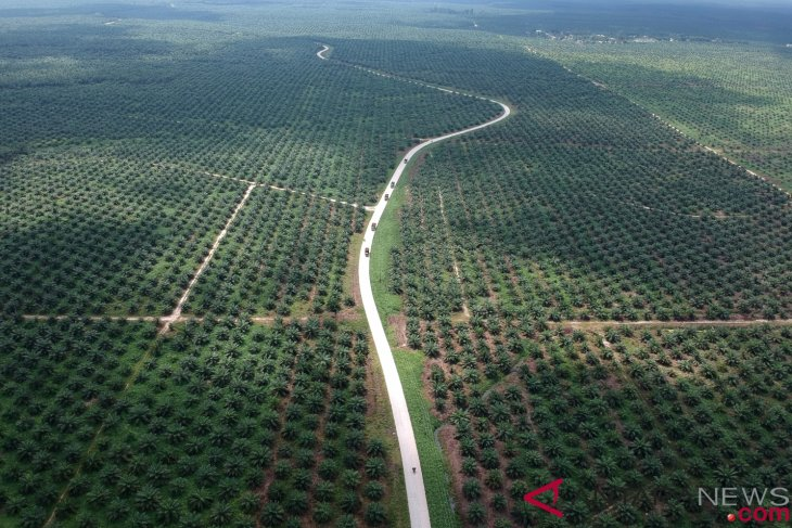Palm oil firms bring no direct benefits for W Kalimantan: governor