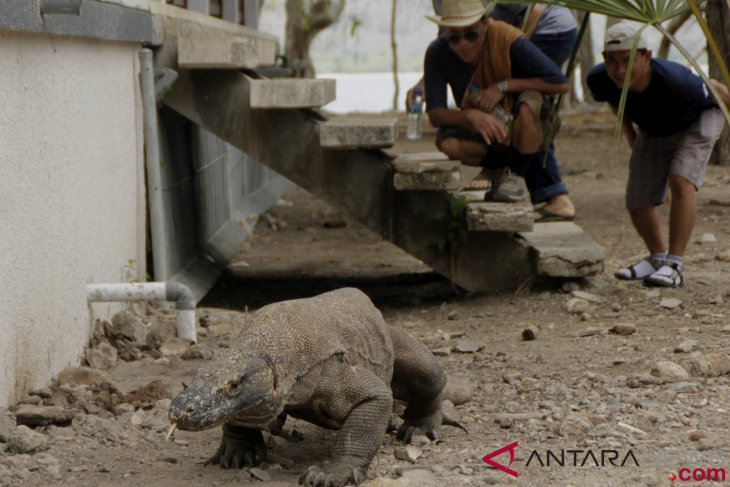 Only Komodo Island to be closed to tourists: governor