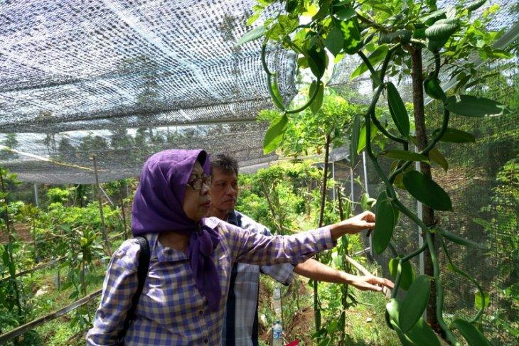 Mengenal wisata edukasi tanaman aromatik khas Indonesia