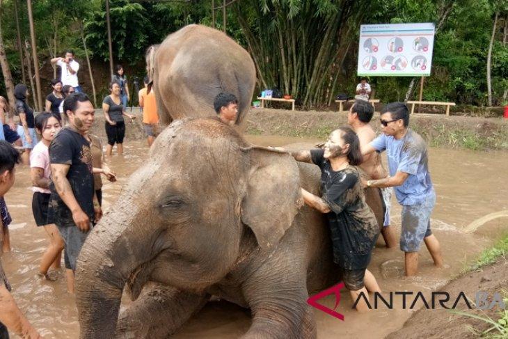 Bali Zoo tawarkan atraksi mandi lumpur bersama gajah