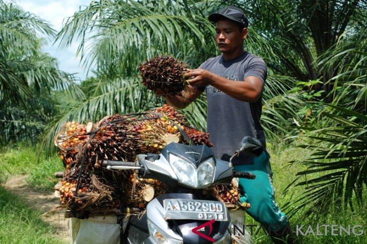 Indonesia, Malaysia protest palm oil discrimination by EU