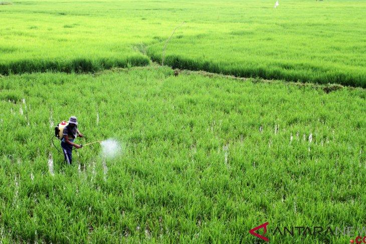 Pestisida tingkatkan resiko terkena autisme pada bayi