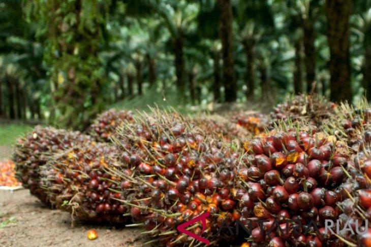 Produksi CPO Aceh Barat naik 172.842 ton per tahun