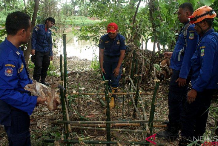 Pemkot Singkawang siapkan jerat untuk tangkap buaya resahkan warga