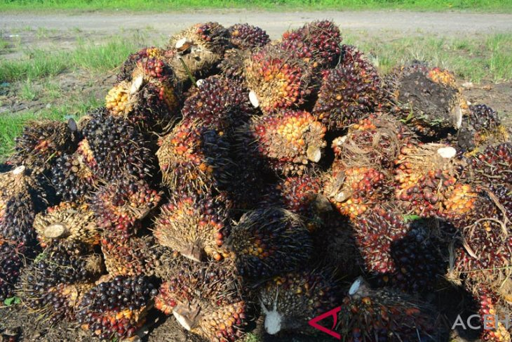Harga sawit di Mukomuko turun hingga angka Rp105 per kg