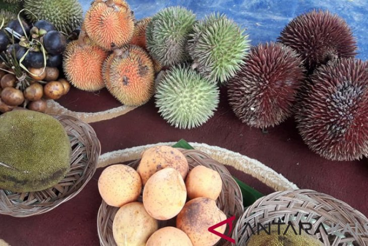 Balangan to hold rare fruit festival annually