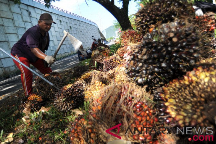 Harga TBS di Riau hampir Rp2.000/kg