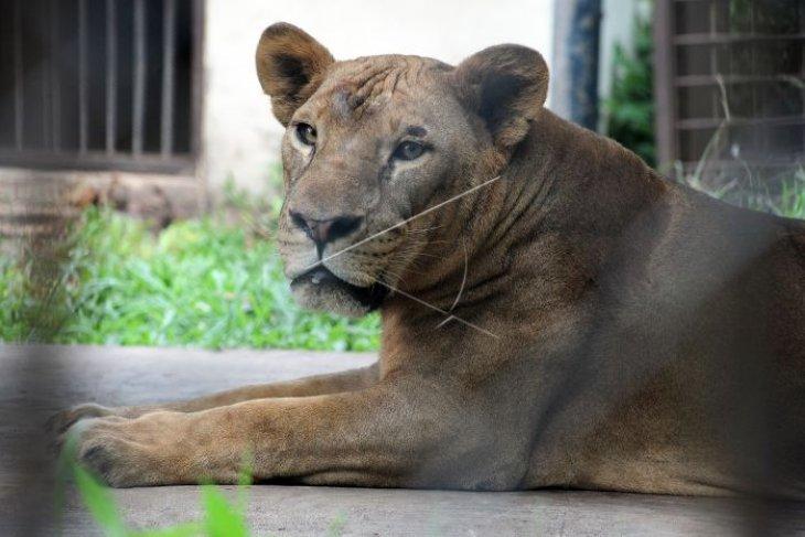 Evaluasi Taman Rimba pascakematian binatang