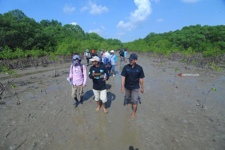 OISCA Monitoring Hutan Mangrove