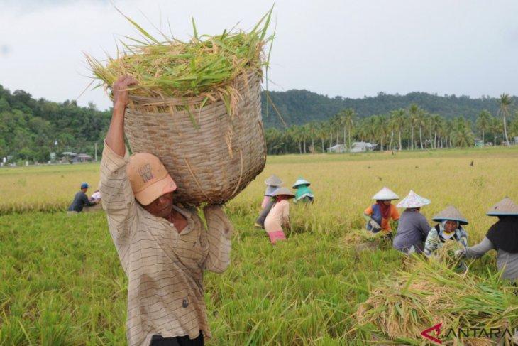 Pengamat: Dampak COVID-19, permintaan sektor pertanian Kalbar menurun