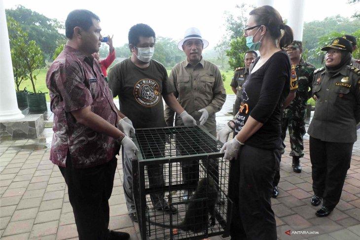 BKSDA Akan Lepasliarkan Puluhan Monyet Ke Cagar Alam Pulau Nusa Barong