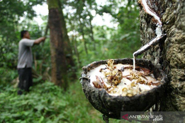 BI: Kinerja industri karet dan  makanan di Sumut mulai pulih