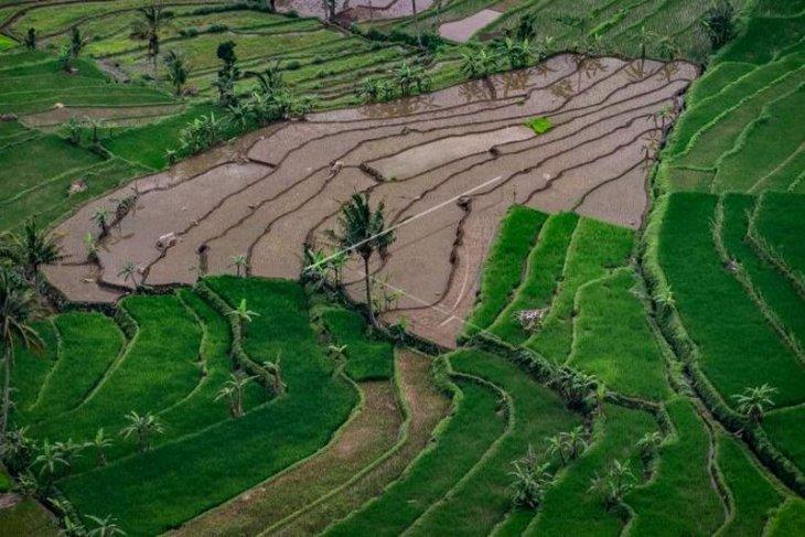 Setahun Jokowi-Ma'ruf, membenahi data pangan Indonesia