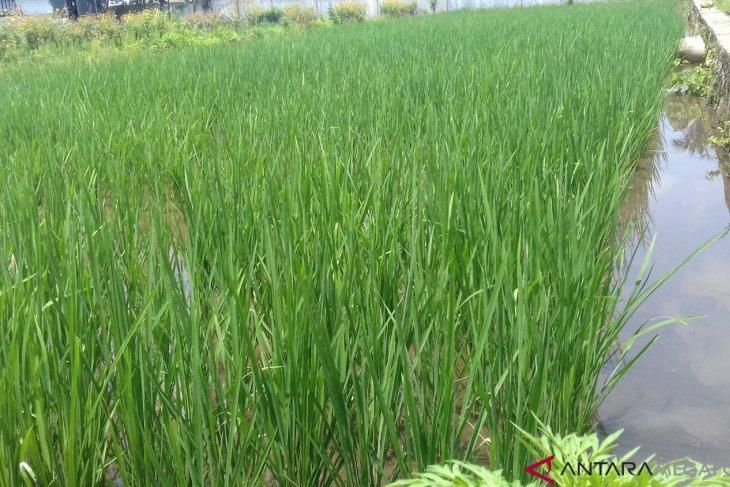 Lahan pertanian di Bogor berkurang setiap tahun