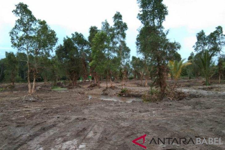 Desa Tukak kembangkan wisata mangrove