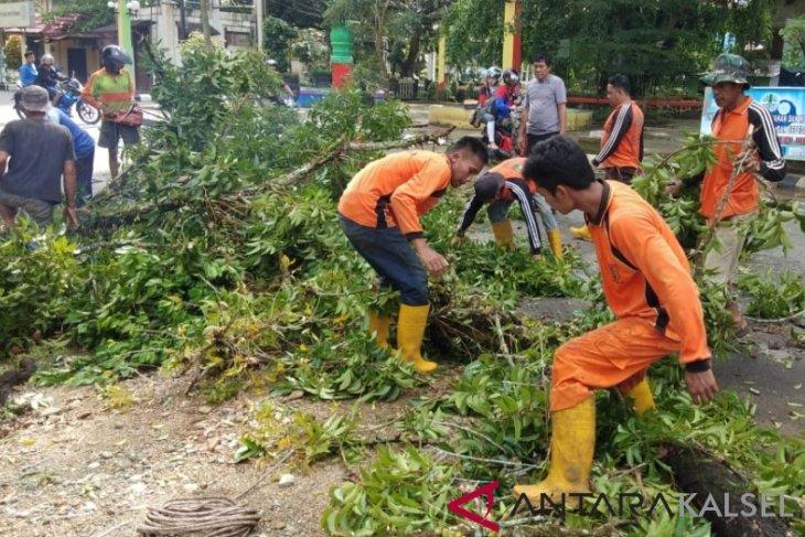 40 pohon mahoni peninggalan Belanda di kota Barabai ditebang
