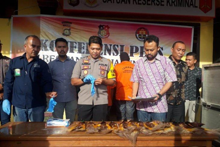 Polres Tanjabtim gagalkan penyelundupan satwa yang diawetkan