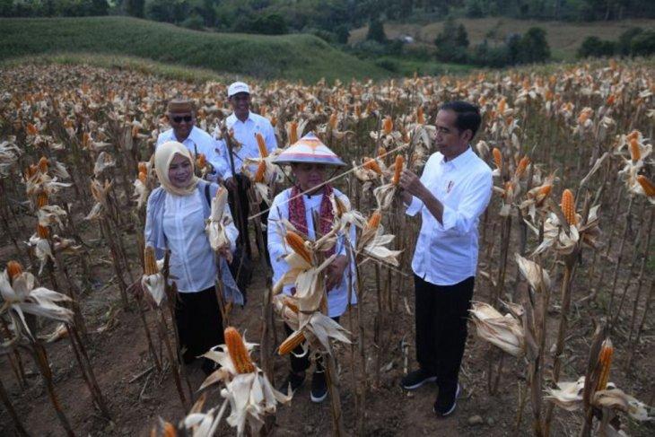 Temui Petani Gorontalo, Presiden Sebut Indonesia Buka Pasar Ekspor Jagung
