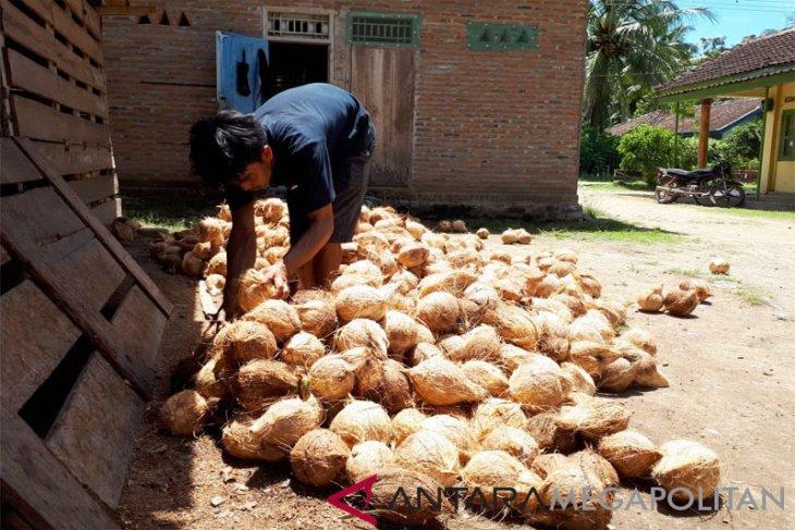Nilai tambah komoditas kelapa ditingkatkan, Berharap harga naik lagi