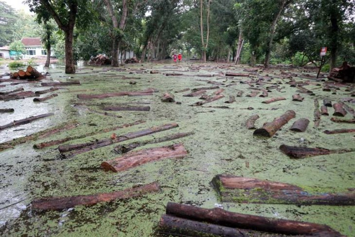Ratusan balok jati di Bojonegoro terendam banjir