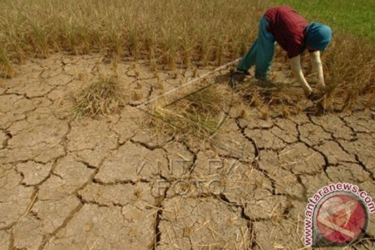 S. Sumatra to likely face longer drought: Disaster Mitigation Agency
