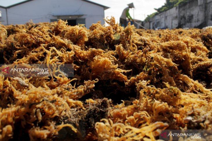 Indonesia's CV Sarana Multi Jaya exports seaweed to South Korea