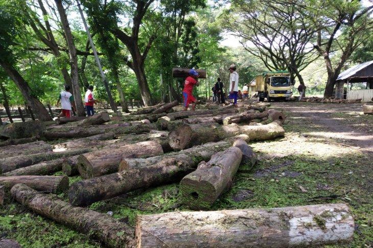 KBM kerahkan puluhan tenaga kerja amankan kayu