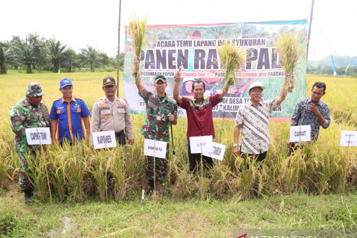 Bupati panen raya padi Desa Telaga