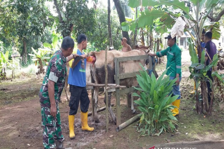 TMMD Task Force checks 153 cows health