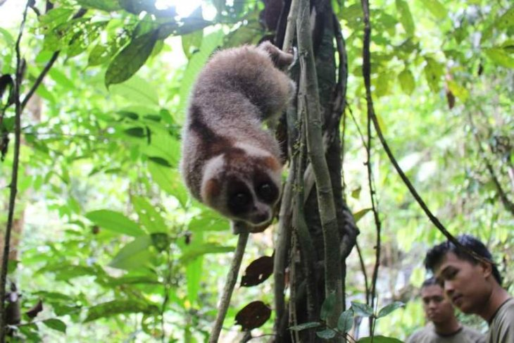 Security officers rescue endangered animal in West Sumatra