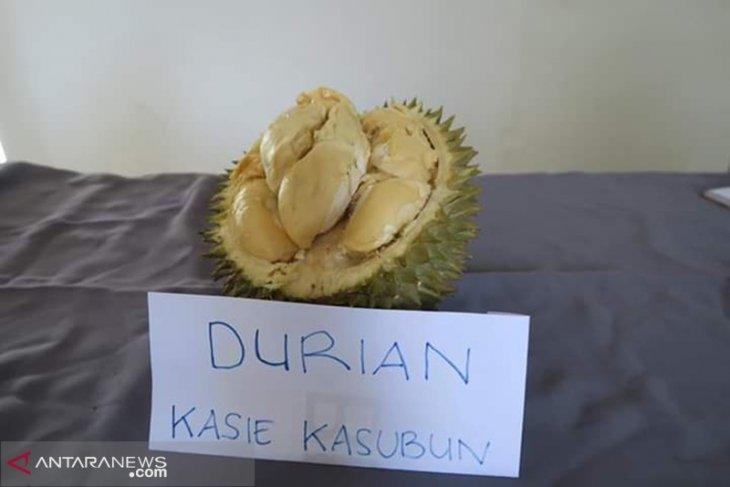 Kementan RI teliti durian varietas lokal Rejang Lebong