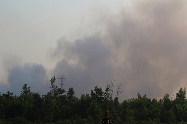 Stringent law enforcement crucial to keep forest fire cases down