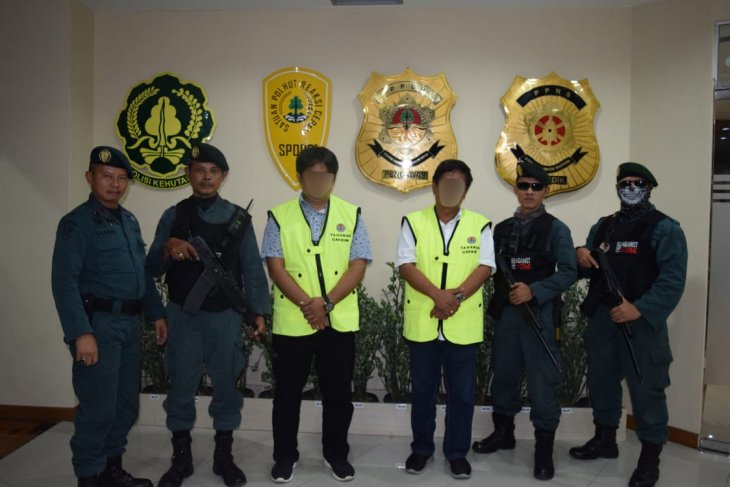 Three bosses of illegal timber named suspects by KLHK