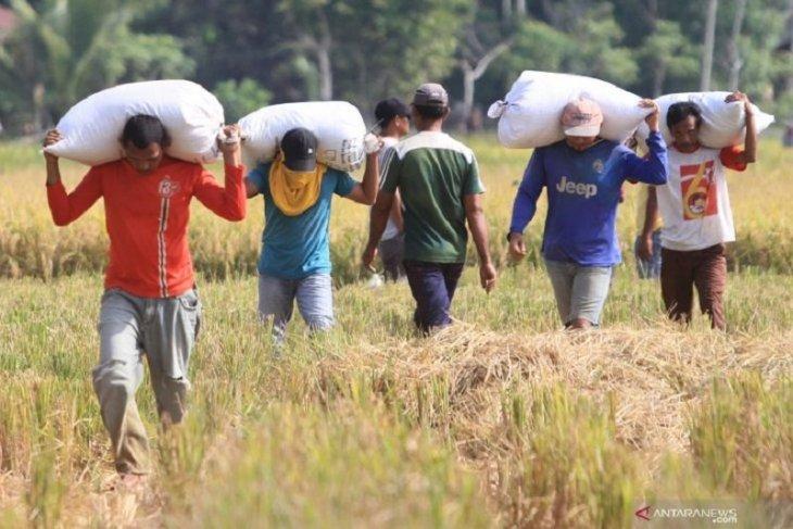 Angkatan kerja di Jambi turun 61,09 ribu orang