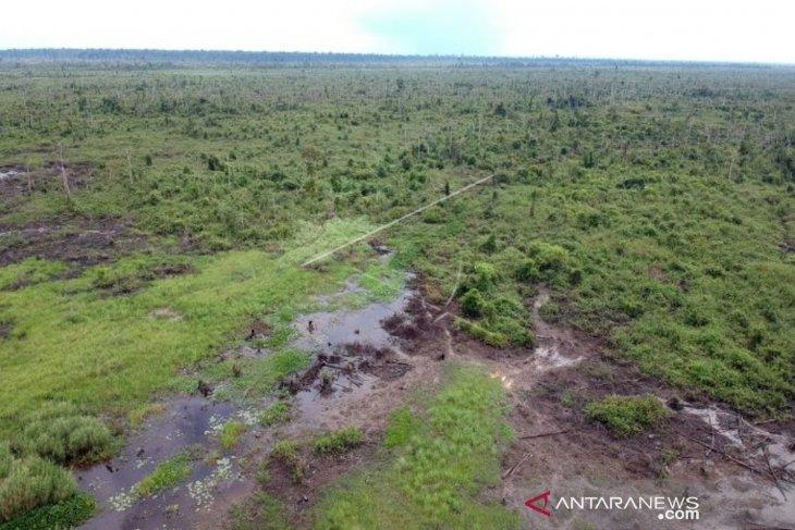 200 ribu tanaman khas gambut ditanam di Tahura Orang Kayo Hitam Jambi