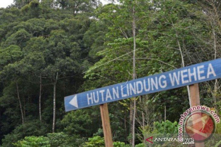 Pemprov Kaltim dukung Forum FEE Wehea Kelay Untuk Orangutan