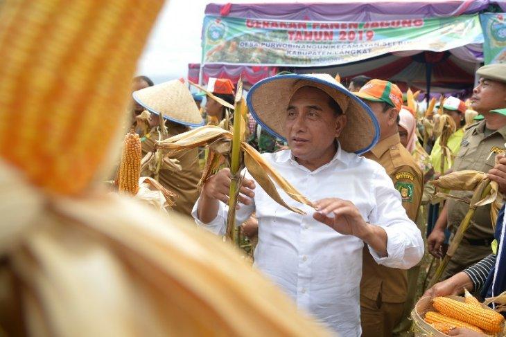 Sumut targetkan produksi jagung 1,7 juta ton