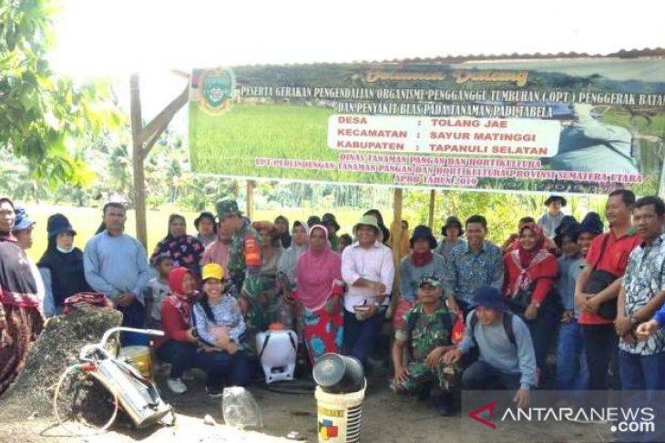 Dinas Tanaman Pangan dan Hortikultura Sumut lakukan Gerdal OPT di Tapsel