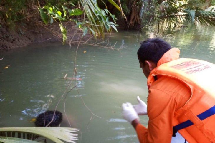 Seorang warga tewas diterkam buaya saat cari ikan