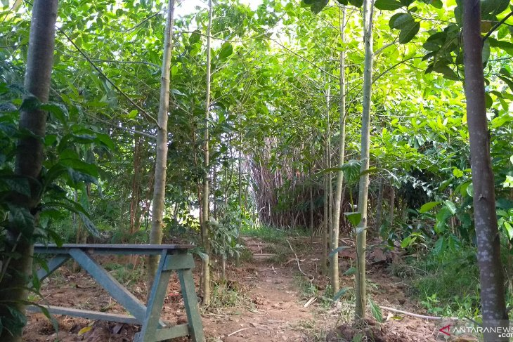 Peringati Hari Kartini dengan tanam pohon di Bantaran SKM