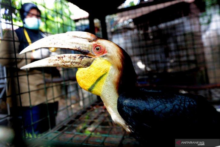 Peneliti burung Rangkong terima penghargaan Whitley Award 2020 dari Inggris
