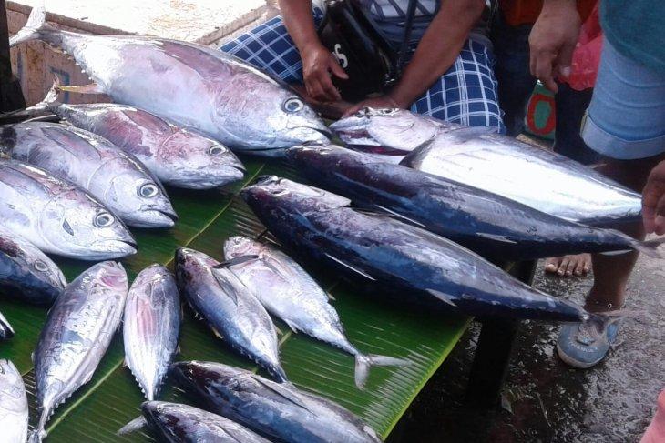Harga ikan cakalang segar di Ambon melonjak