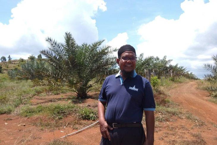 Ribuan pohon kurma tumbuh subur di lahan tandus Aceh