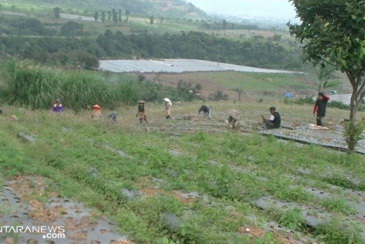 Sukabumi akan tambah 1.000 hektare lahan pertanian bawang putih