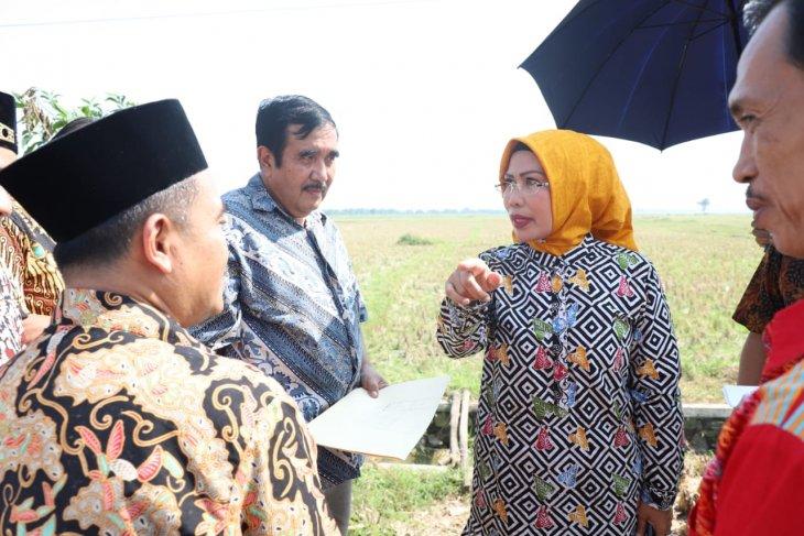 Bupati Serang pantau lokasi Islamic Centre Syech Nawawi Albantani