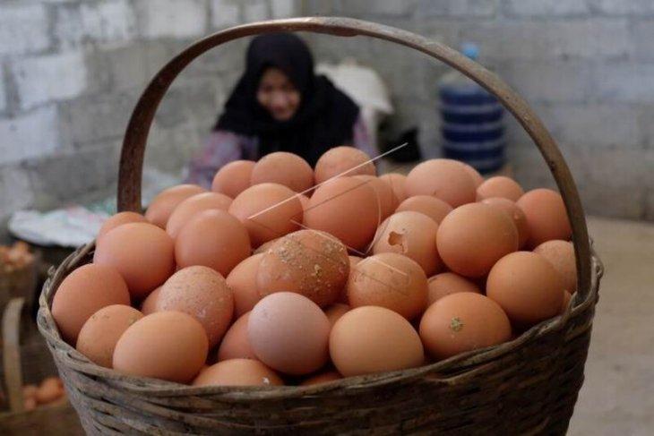Harga telur turun