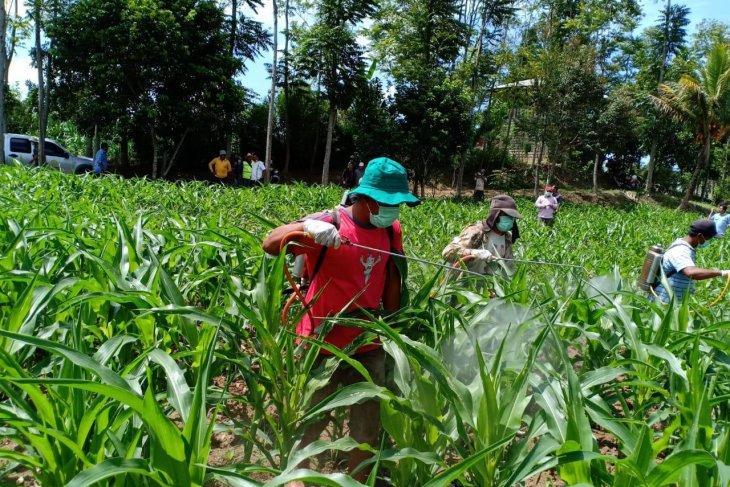 Ministry takes precautionary measures against armyworm pest attacks