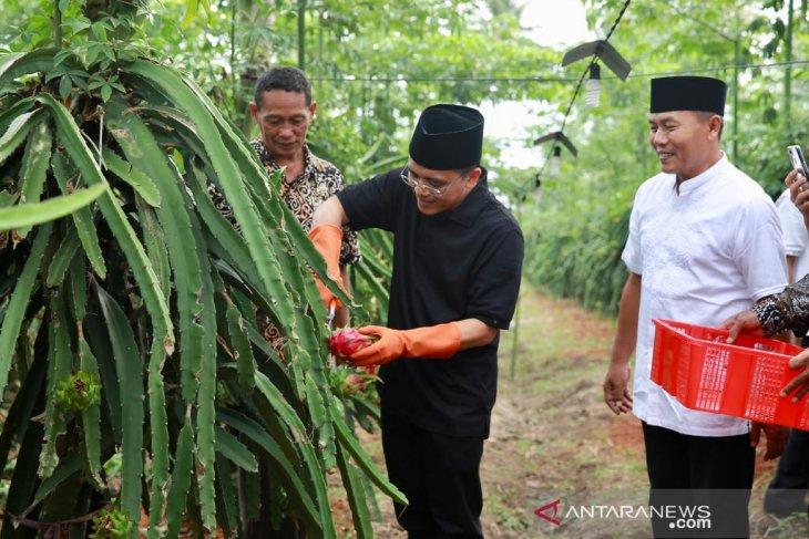 Bupati Banyuwangi dorong petani buah naga beralih sistem semiorganik