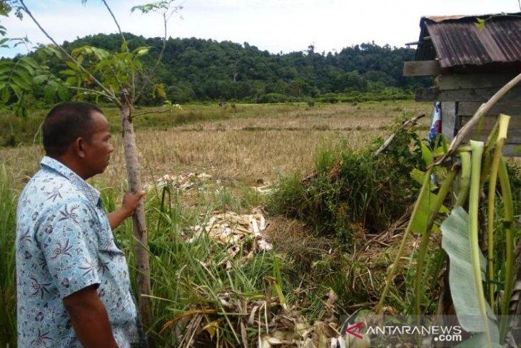 Sepuluh ekor gajah merusak kebun di  Aceh Jaya